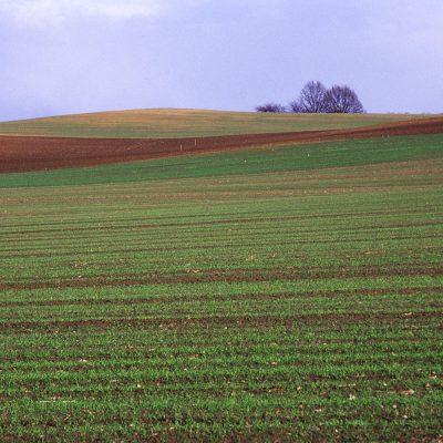 Feldlinien (Foto: Andreas Kuhrt)