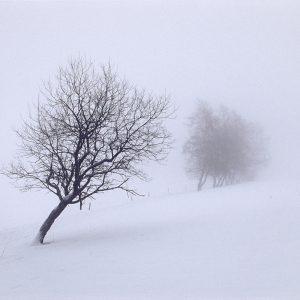Neujahrsmorgen am Knüllfeld (Foto: Andreas Kuhrt)