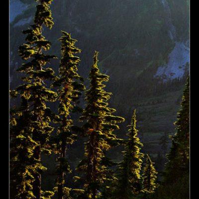 Wald (Foto: Frank Hausdörfer)