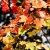 Serie: Herbstlaub (Foto: Frank Hausdörfer)