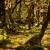 Regenwald in Neuseeland (Foto: Frank Hausdörfer)