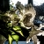 Serie: Tulpe (Foto: Uli Pfeufer)