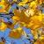Herbst (Foto: Roland Kastner)