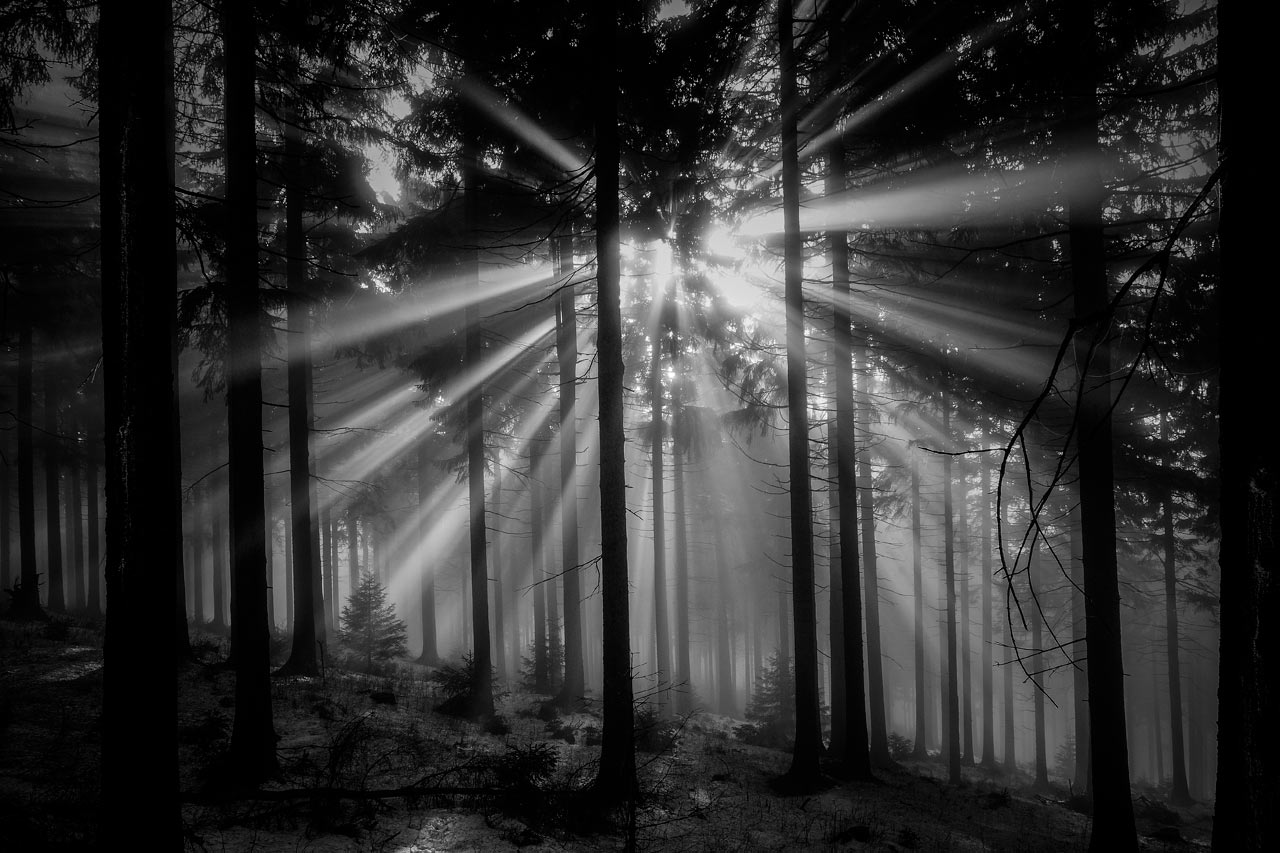Serie: Nebelwald (Foto: Peter Zastrow)