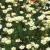 Eine Mohnblume (Foto: Karl-Heinz Richter)
