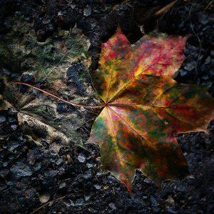 Herbstblatt (Foto: Rainer Koch)