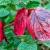 Rot auf Grün (Foto: Ute Zohles)