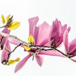 Frühlingsfarben (Foto: Uli Pfeufer)