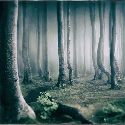 Geisterwald (Foto: Rainer Koch)