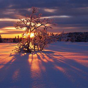 Wintersonne in Norwegen (Foto: Manuela Hahnebach)