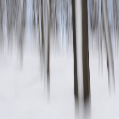 Winter-Wisch-Wald (Foto: Andreas Kuhrt)