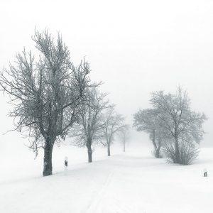 Ganz in Weiß (Foto: Manuela Hahnebach)