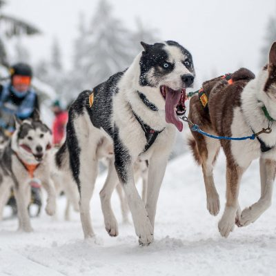 Rennen (Foto: Uli Pfeufer)