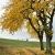 Herbst (Foto: Günter Giese)