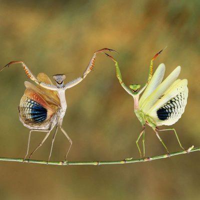 """Glanzlichter 2019: Showtime, Siegerbild der Kategorie """"Moments in Nature"""" (Foto: Hasan Baglar, Qelle: gotha-aktuell.info)"""