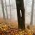 Serie: Herbst 1 (Foto: Manuela Hahnebach)