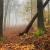 Serie: Herbst 2 (Foto: Manuela Hahnebach)