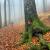 Serie: Herbst 3 (Foto: Manuela Hahnebach)
