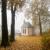 Serie: Herbst 4 (Foto: Manuela Hahnebach)