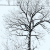 Winterkleid (Foto: Karl-Heinz Richter)