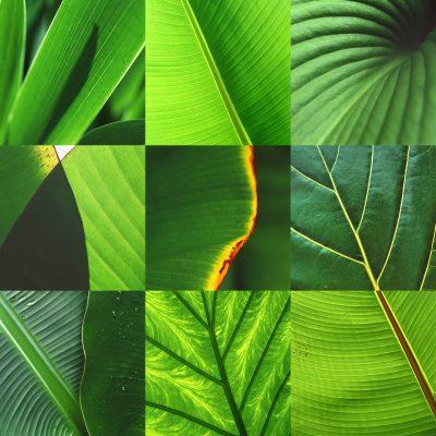 FotoSynthese: Blattgrün (Fotos: Andreas Kuhrt)
